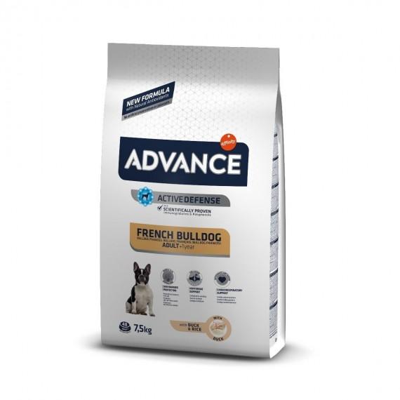 Advance French Bulldog - 1