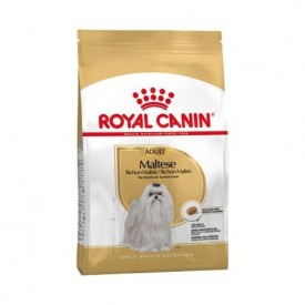 Royal-Canin-Bichón-Maltés-Adulto