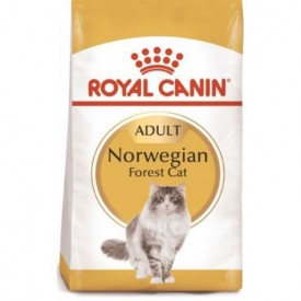 Royal Canin Gato Norwegian Forest - 1