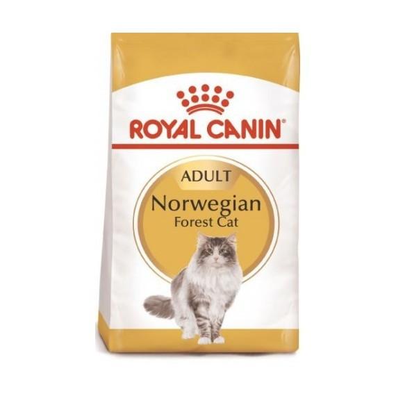 Royal Canin Gato Norwegian Forest - 1