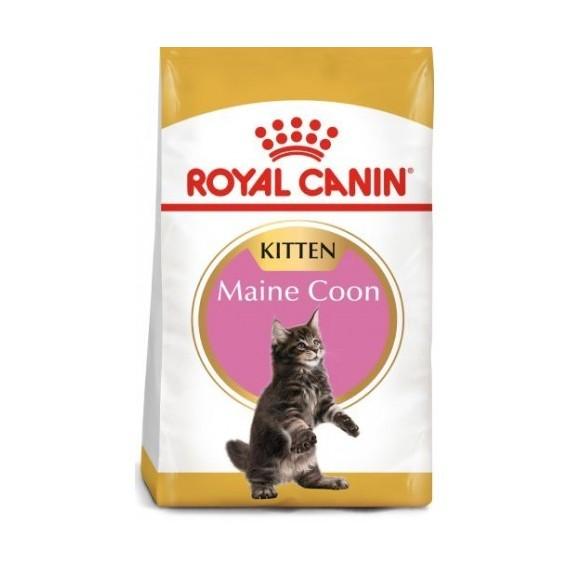 Royal Canin Gato Kitten Maine Coon - 1