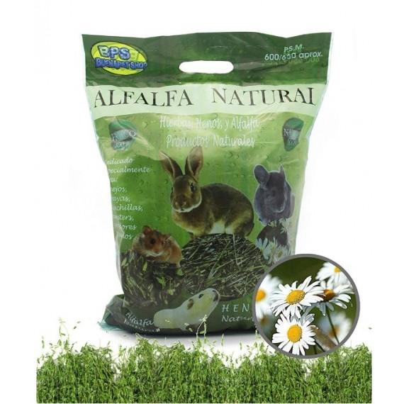 Alfalfa-Natural-para-Roedores