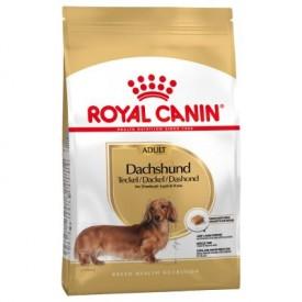 Royal Canin Adulto Dachshund - 1
