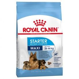 Royal Canin Maxi Starter - 1