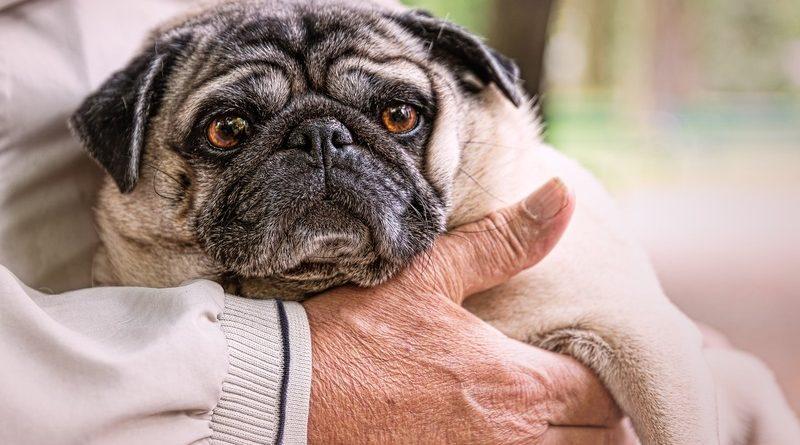 Cuidados de los perros más viejitos