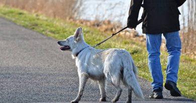 beneficios de pasear al perro a diario