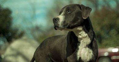 existen las razas de perros peligrosos
