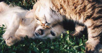 pueden convivir perros y gatos