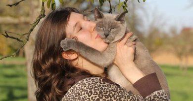 puedo tener un gato si estoy embarazada