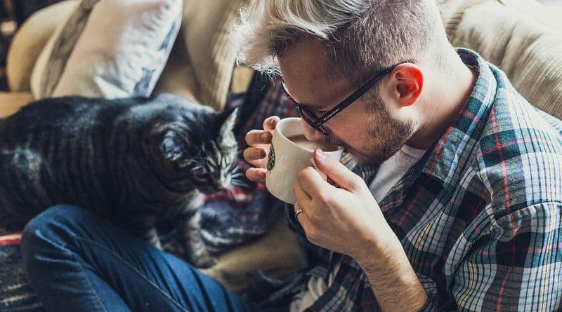 Tipos de gatos, ¿cuál elegir?
