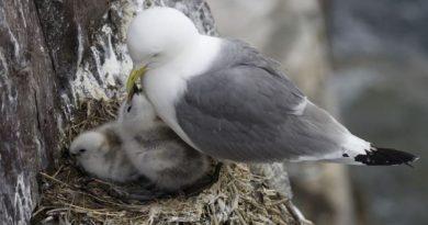 Tipos de nidos para pájaros