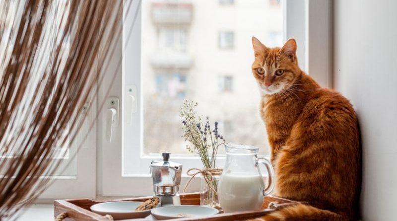 mejor comida para gatos