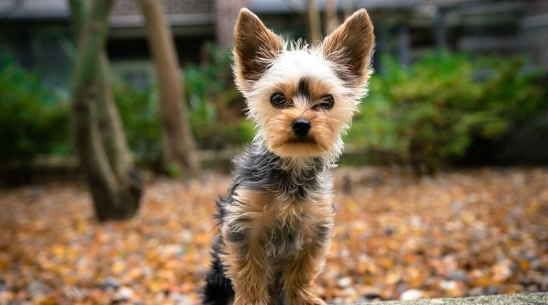 mejor pienso para perros pequeños