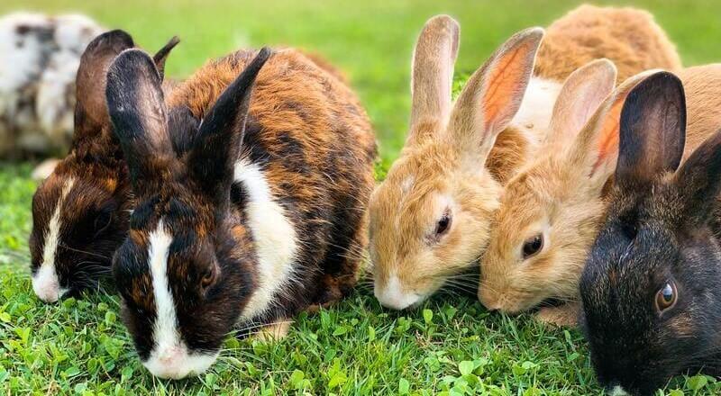 alimentacion conejos pequeños