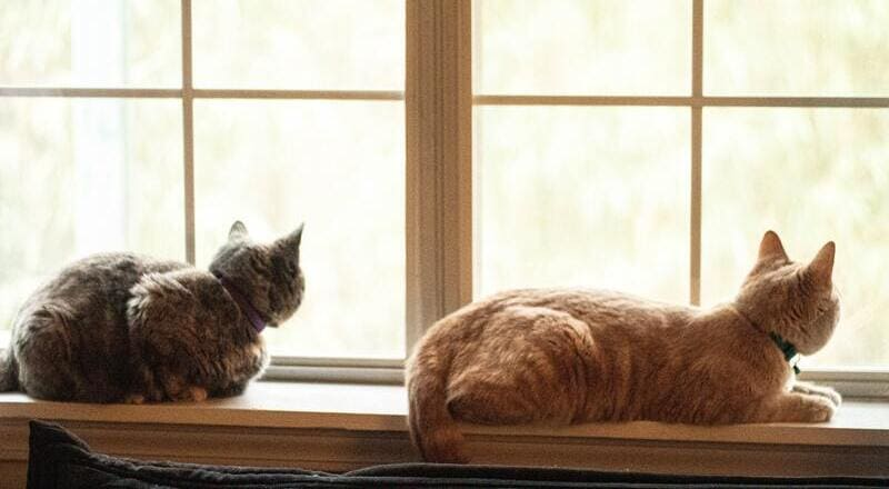 como sudan gatos