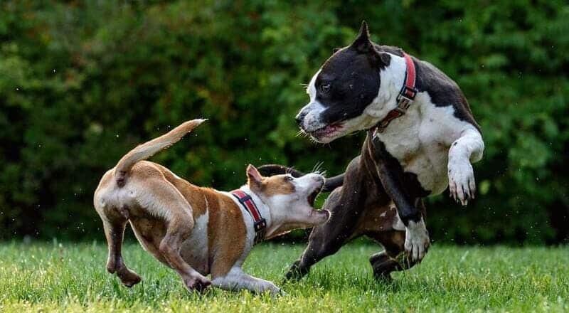 como sudan los perros