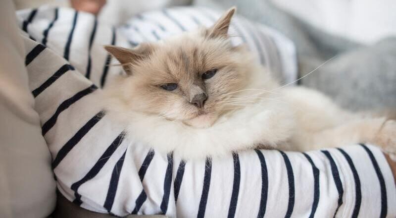 gato calor