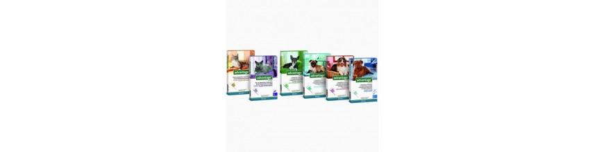 ▷ Comprar Pipetas Advantage para Perros - Housepet
