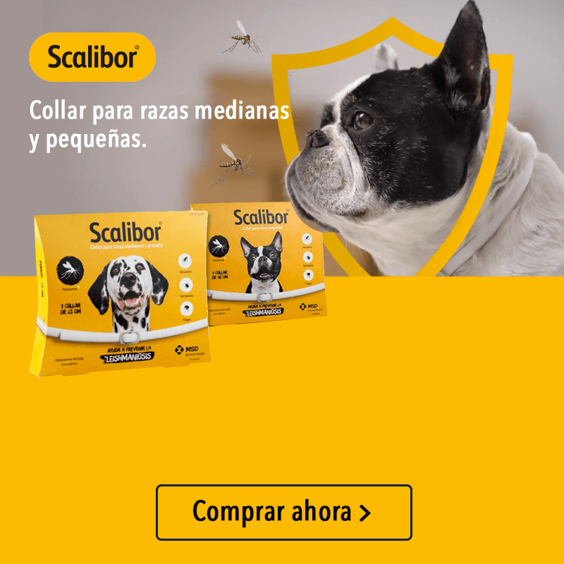 collar-scalibur