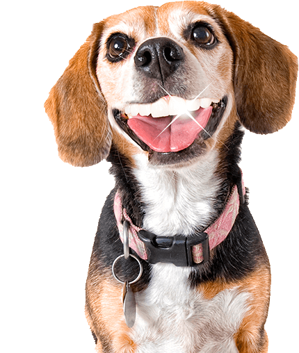 9532608e8113 Tienda Online de Animales de Productos Para tu Mascota – HousePet